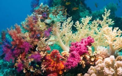 Coral reefs, magnificent underwater world full of vivacity.