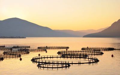Fish farming and sustainability.