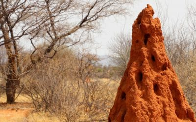 How Termite Mounds Inspired A Self-Cooling Building